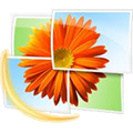 Windows Photo Gallery Icon