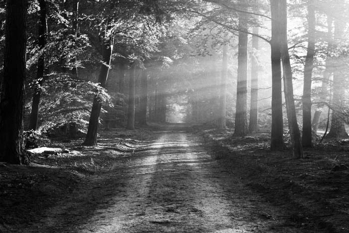 Waldlandschaft Kodak BW 400 CN