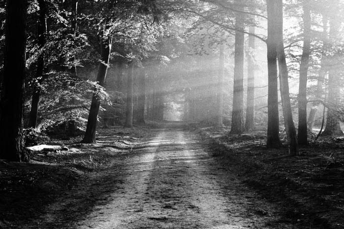 Paesaggio forestale Kodak Tri-X 400