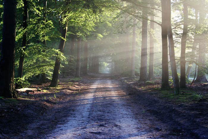 Paesaggio forestale originale