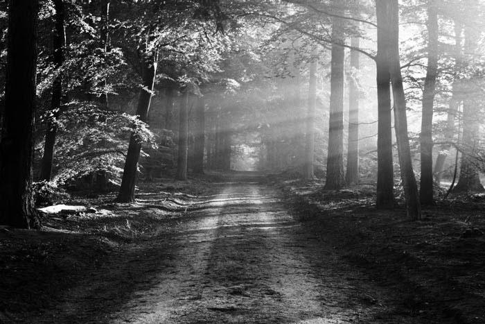 Waldlandschaft Neopan Acros 100