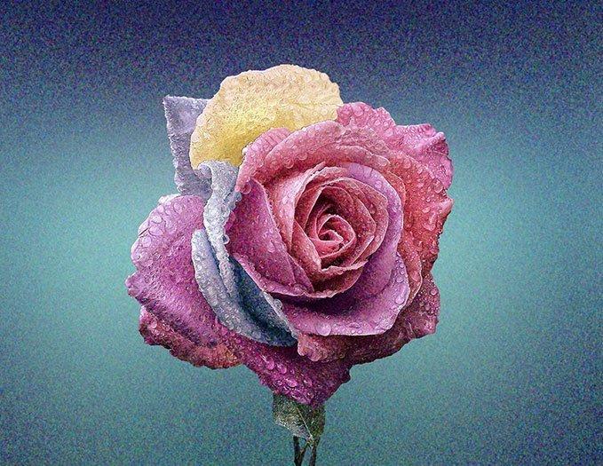 Bloom Çiçeği Film Tahıl