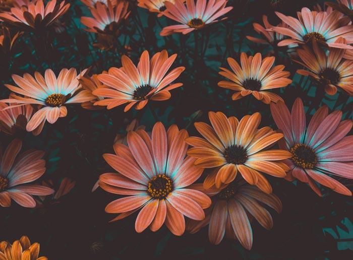 Bloom Original