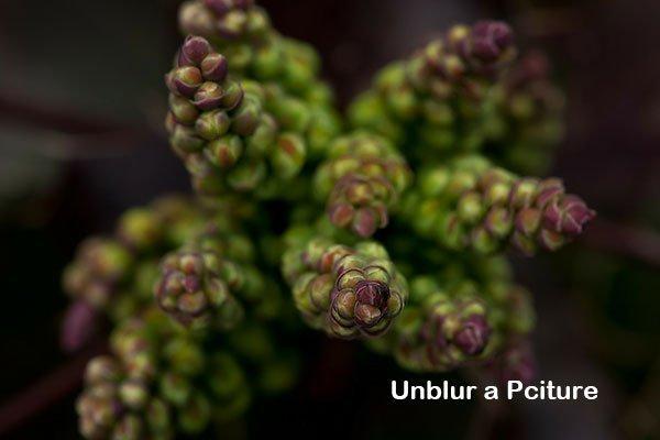 Unblur a Picture